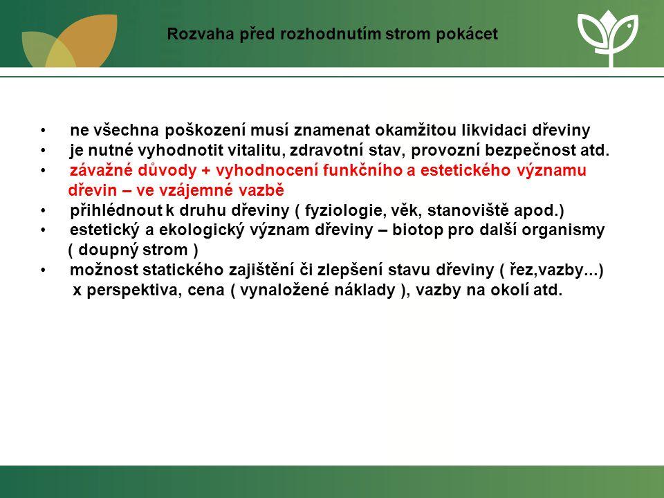 Rozvaha před rozhodnutím strom pokácet • ne všechna poškození musí znamenat okamžitou likvidaci dřeviny • je nutné vyhodnotit vitalitu, zdravotní stav