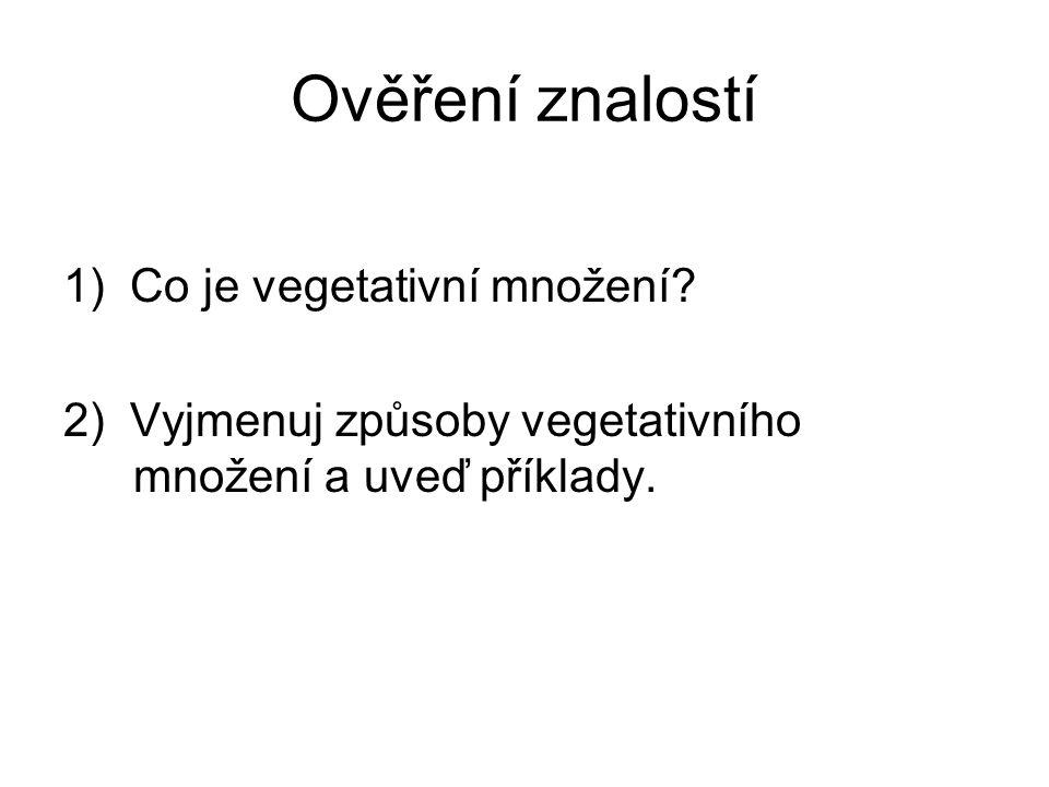 Ověření znalostí 1) Co je vegetativní množení.