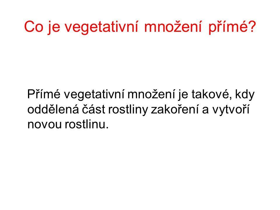 Co je vegetativní množení přímé.