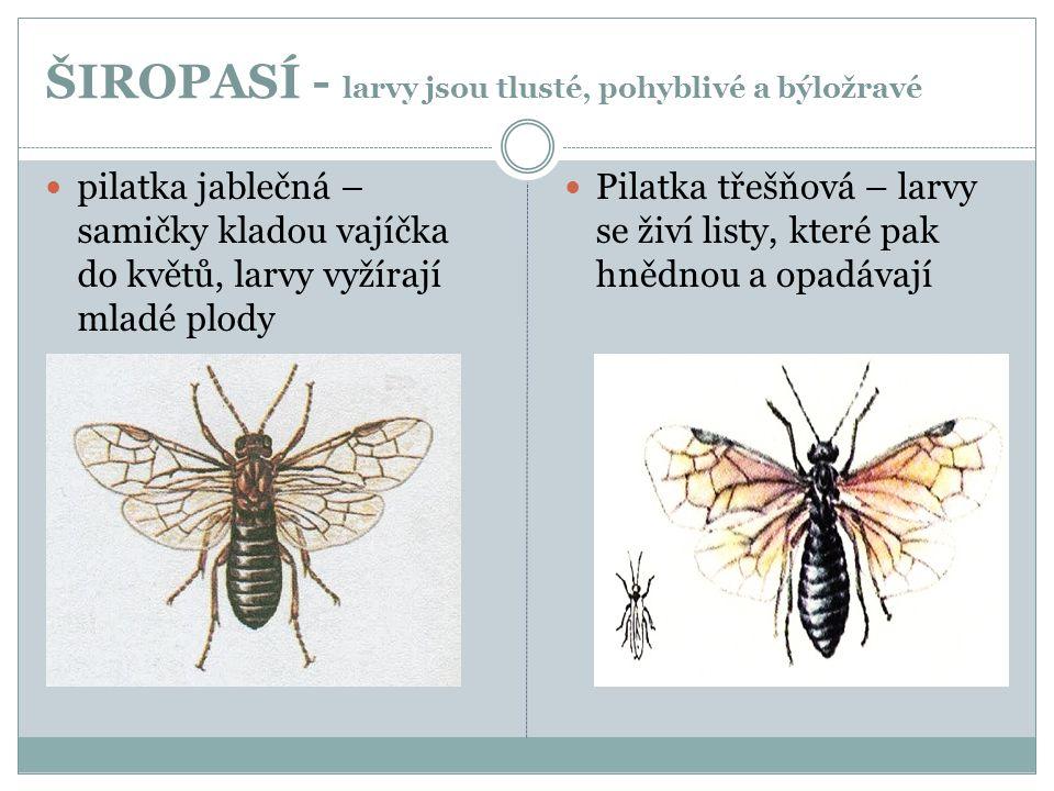 ŠIROPASÍ - larvy jsou tlusté, pohyblivé a býložravé  pilatka jablečná – samičky kladou vajíčka do květů, larvy vyžírají mladé plody  Pilatka třešňov