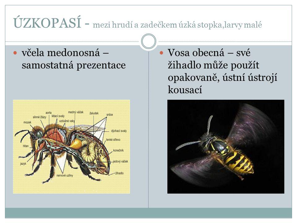 ÚZKOPASÍ - mezi hrudí a zadečkem úzká stopka,larvy malé  včela medonosná – samostatná prezentace  Vosa obecná – své žihadlo může použít opakovaně, ú