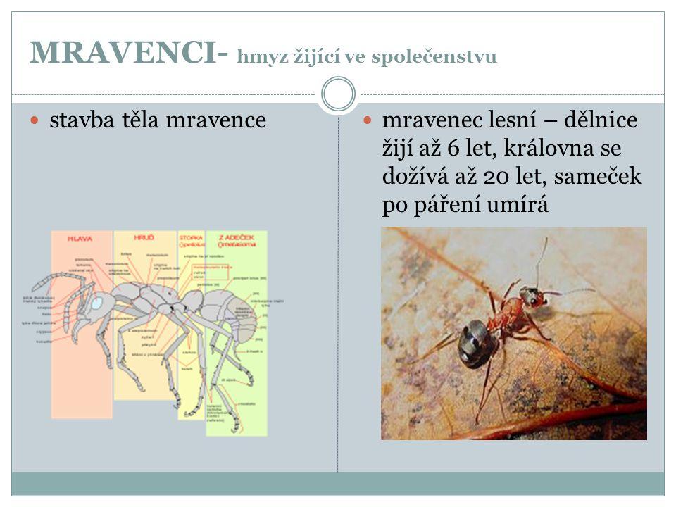 MRAVENCI- hmyz žijící ve společenstvu  stavba těla mravence  mravenec lesní – dělnice žijí až 6 let, královna se dožívá až 20 let, sameček po páření