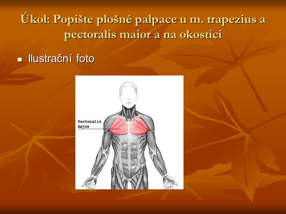 Řešení úkolu  U svalů m.trapezius a m.