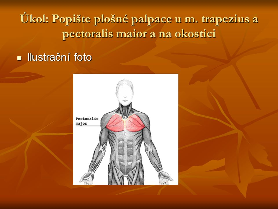 Úkol: Popište plošné palpace u m. trapezius a pectoralis maior a na okostici  Ilustrační foto