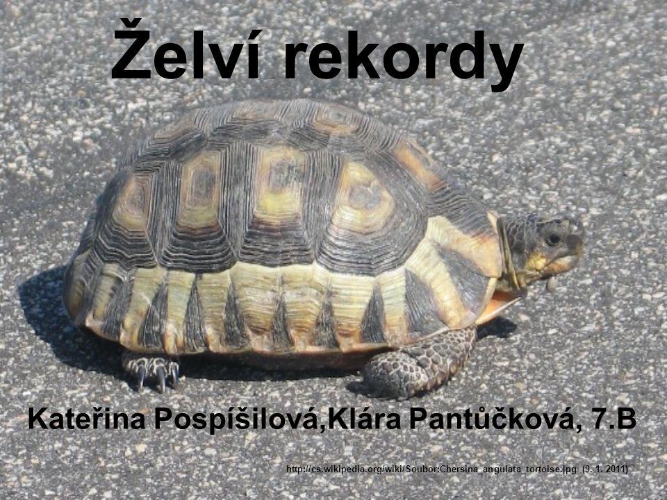 Želví rekordy Kateřina Pospíšilová,Klára Pantůčková, 7.B http://cs.wikipedia.org/wiki/Soubor:Chersina_angulata_tortoise.jpg (9. 1. 2011)