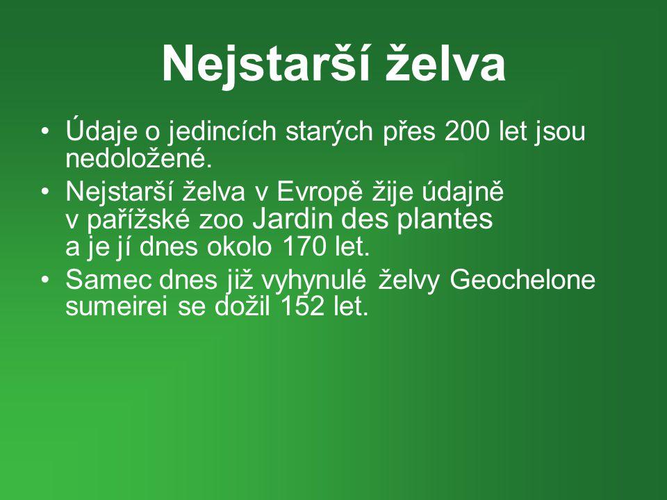 Nejstarší želva •Údaje o jedincích starých přes 200 let jsou nedoložené. •Nejstarší želva v Evropě žije údajně v pařížské zoo Jardin des plantes a je