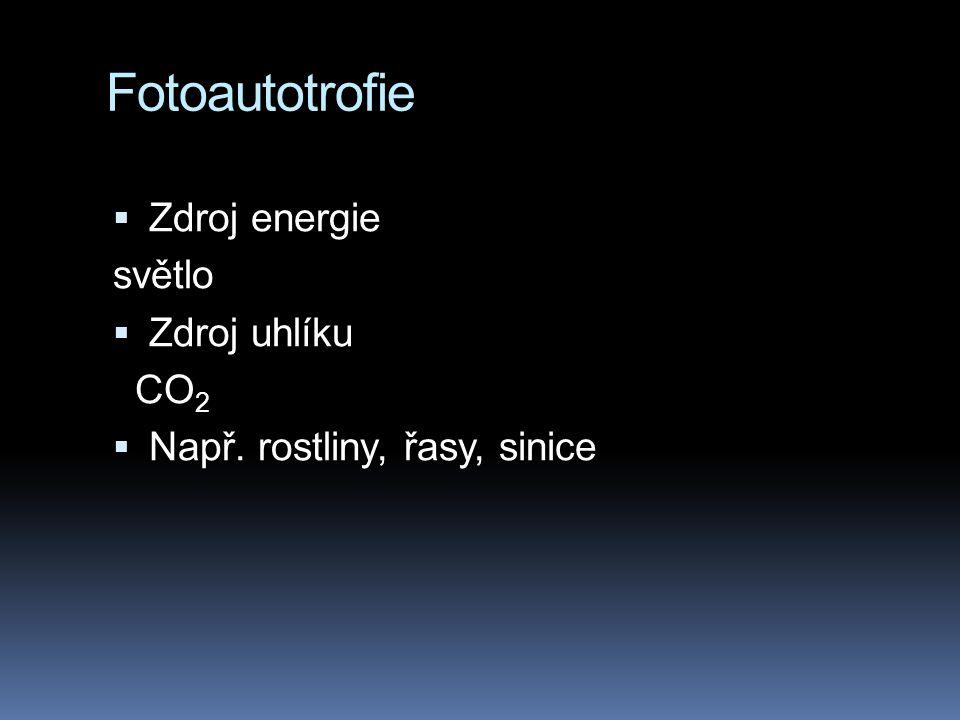 Fotoautotrofie  Zdroj energie světlo  Zdroj uhlíku CO 2  Např. rostliny, řasy, sinice