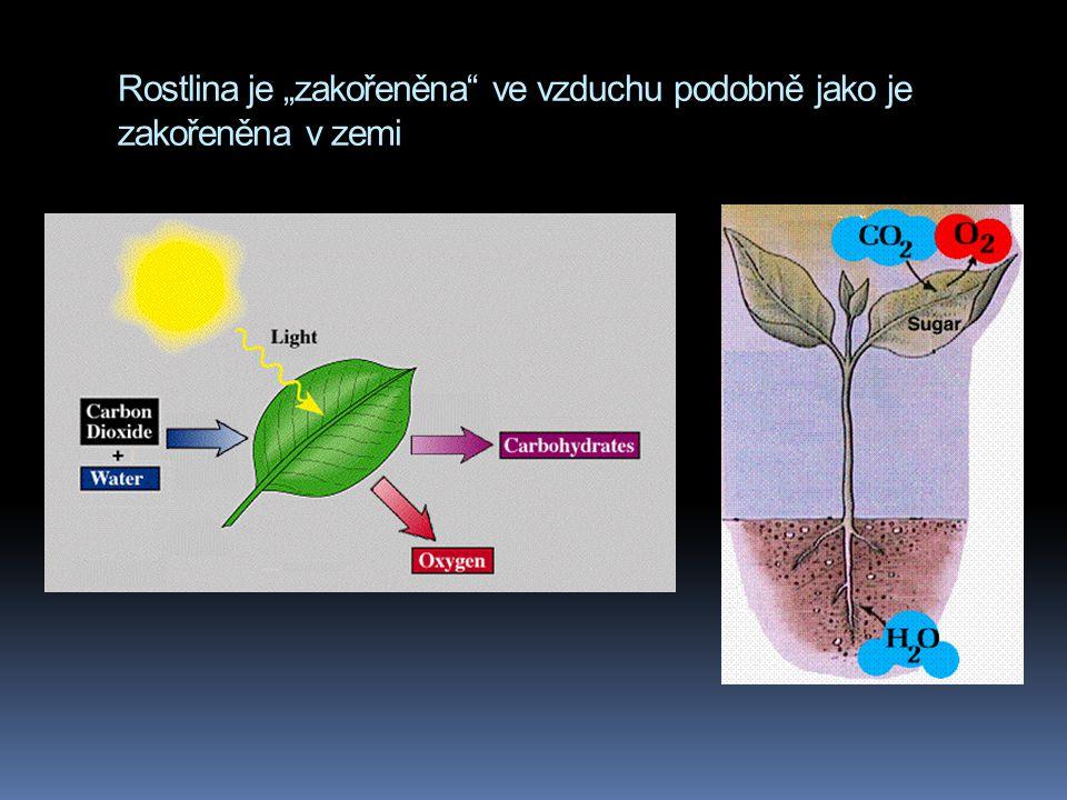 """Rostlina je """"zakořeněna ve vzduchu podobně jako je zakořeněna v zemi"""