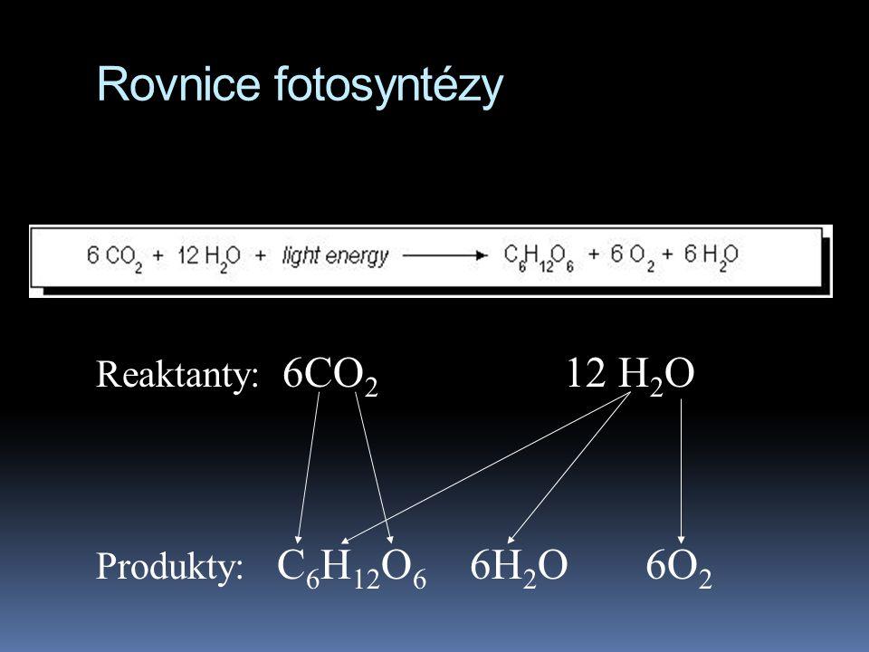 Rovnice fotosyntézy Reaktanty: 6CO 2 12 H 2 O Produkty: C 6 H 12 O 6 6H 2 O 6O 2