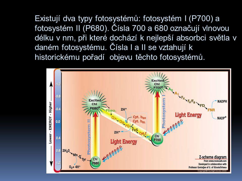 Existují dva typy fotosystémů: fotosystém I (P700) a fotosystém II (P680).