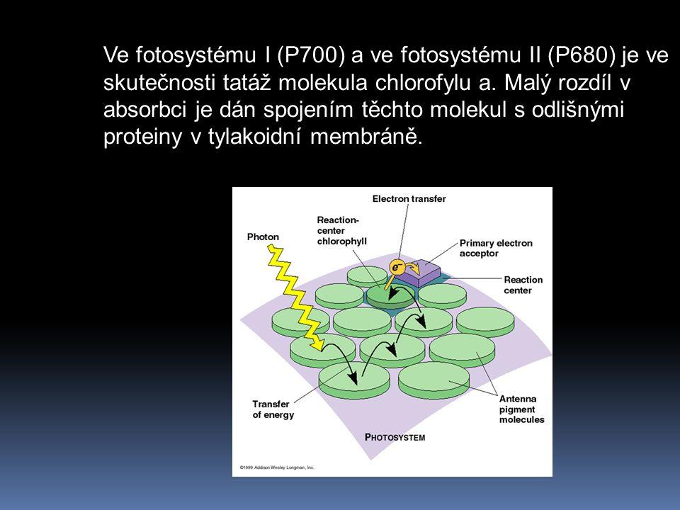 Ve fotosystému I (P700) a ve fotosystému II (P680) je ve skutečnosti tatáž molekula chlorofylu a.