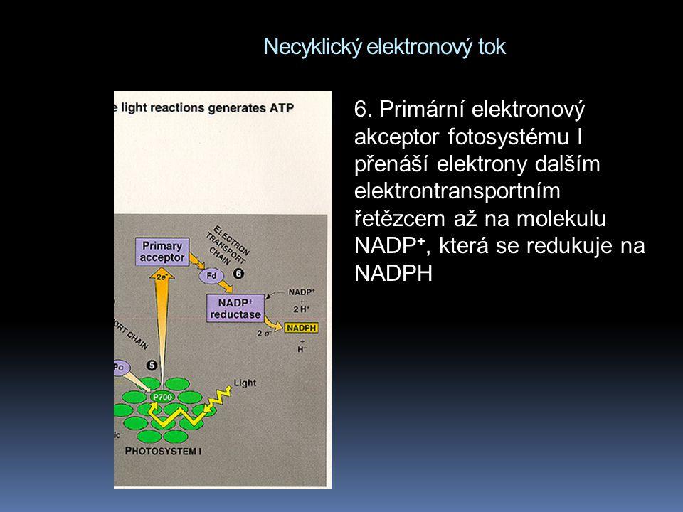 Necyklický elektronový tok 6.