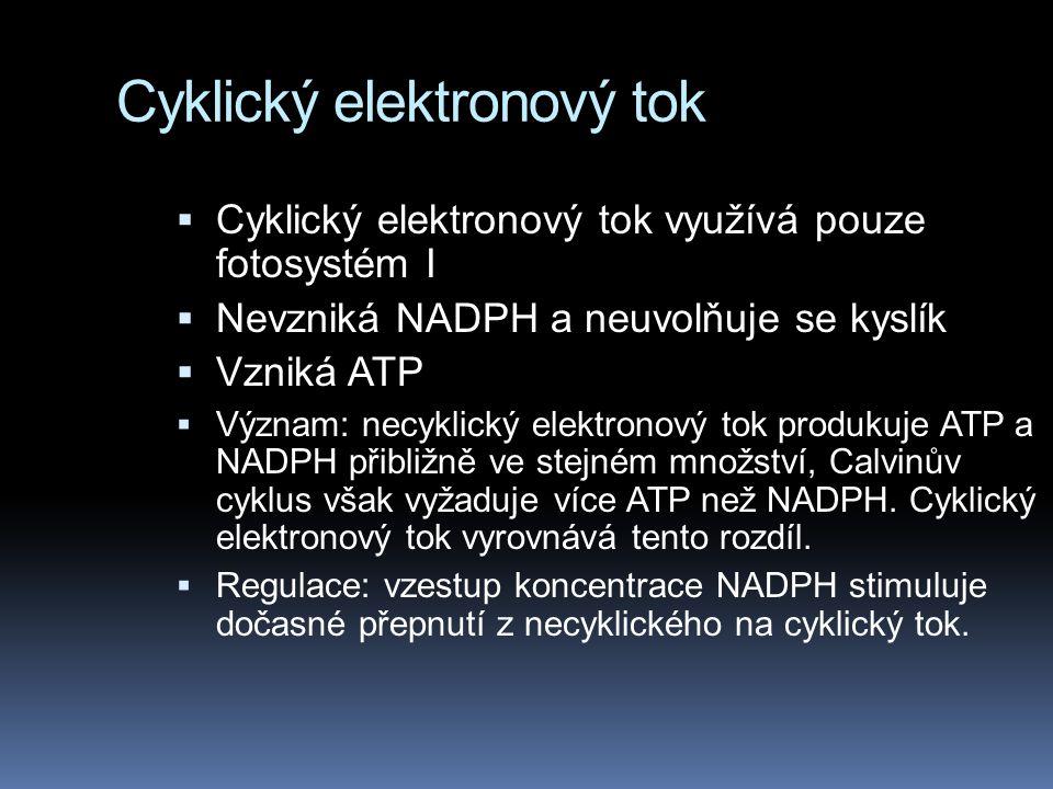 Cyklický elektronový tok  Cyklický elektronový tok využívá pouze fotosystém I  Nevzniká NADPH a neuvolňuje se kyslík  Vzniká ATP  Význam: necyklický elektronový tok produkuje ATP a NADPH přibližně ve stejném množství, Calvinův cyklus však vyžaduje více ATP než NADPH.