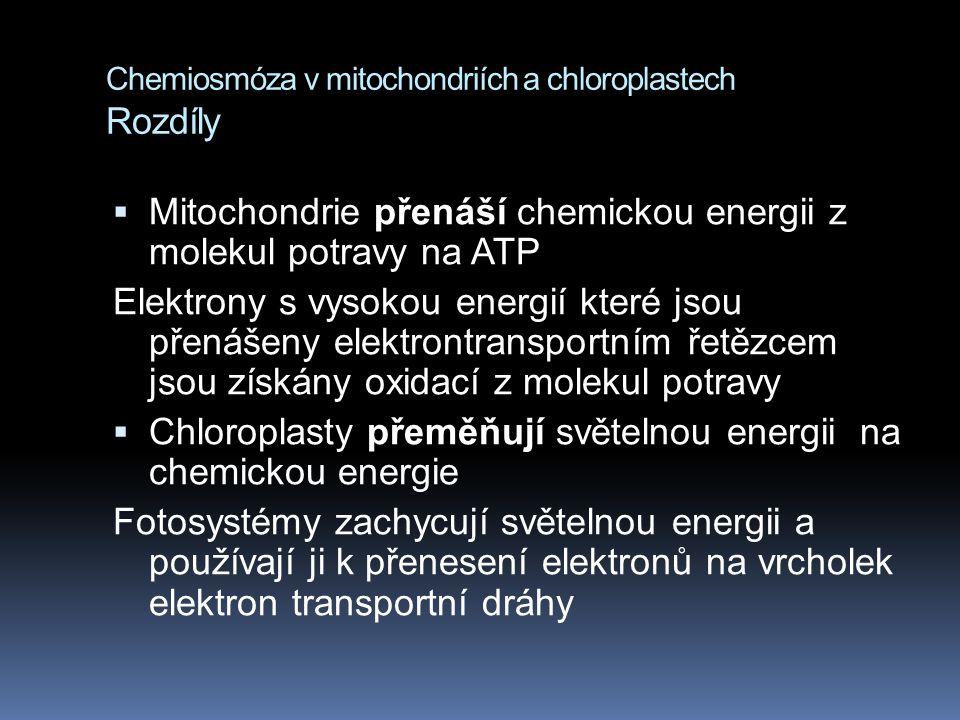 Chemiosmóza v mitochondriích a chloroplastech Rozdíly  Mitochondrie přenáší chemickou energii z molekul potravy na ATP Elektrony s vysokou energií které jsou přenášeny elektrontransportním řetězcem jsou získány oxidací z molekul potravy  Chloroplasty přeměňují světelnou energii na chemickou energie Fotosystémy zachycují světelnou energii a používají ji k přenesení elektronů na vrcholek elektron transportní dráhy