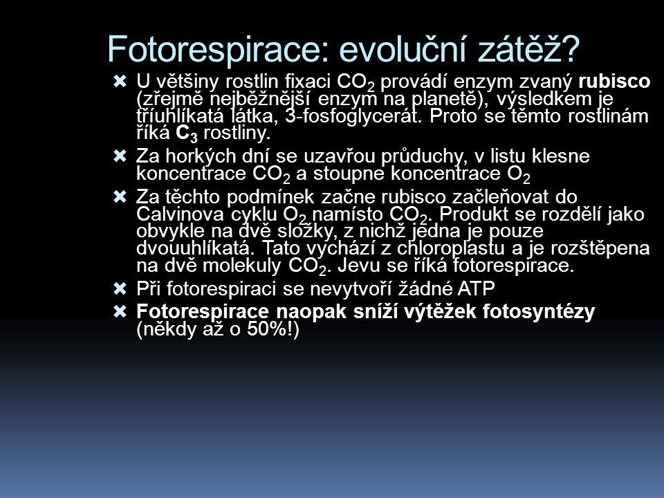 Fotorespirace: evoluční zátěž.
