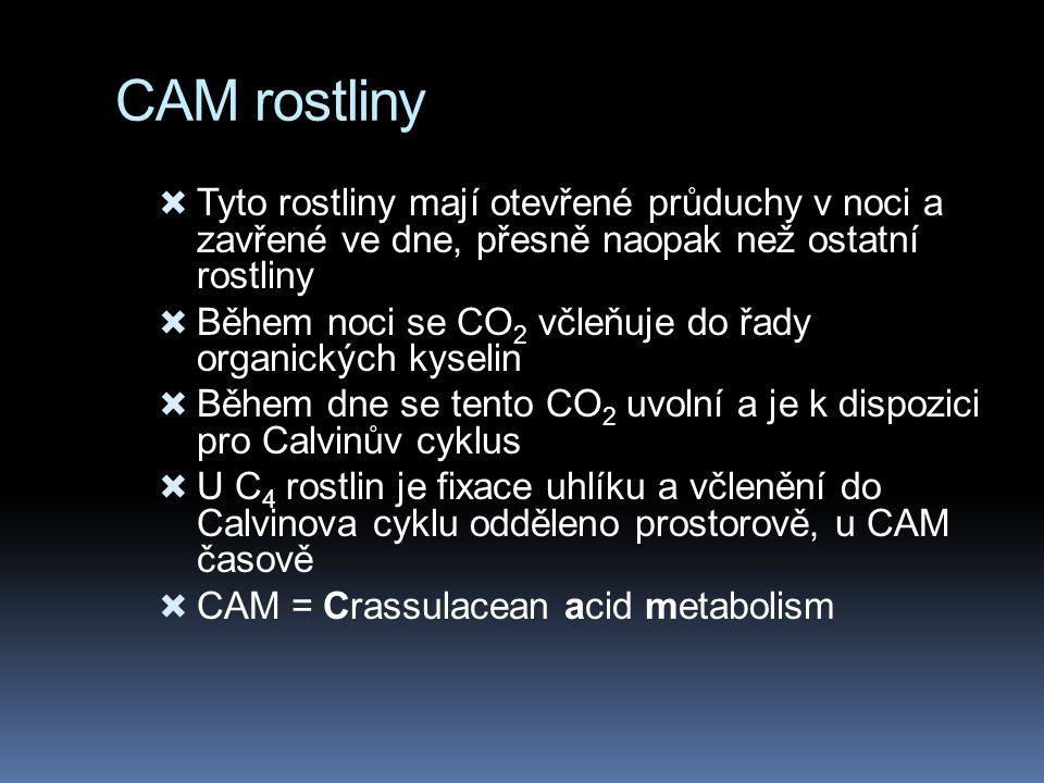 CAM rostliny  Tyto rostliny mají otevřené průduchy v noci a zavřené ve dne, přesně naopak než ostatní rostliny  Během noci se CO 2 včleňuje do řady organických kyselin  Během dne se tento CO 2 uvolní a je k dispozici pro Calvinův cyklus  U C 4 rostlin je fixace uhlíku a včlenění do Calvinova cyklu odděleno prostorově, u CAM časově  CAM = Crassulacean acid metabolism