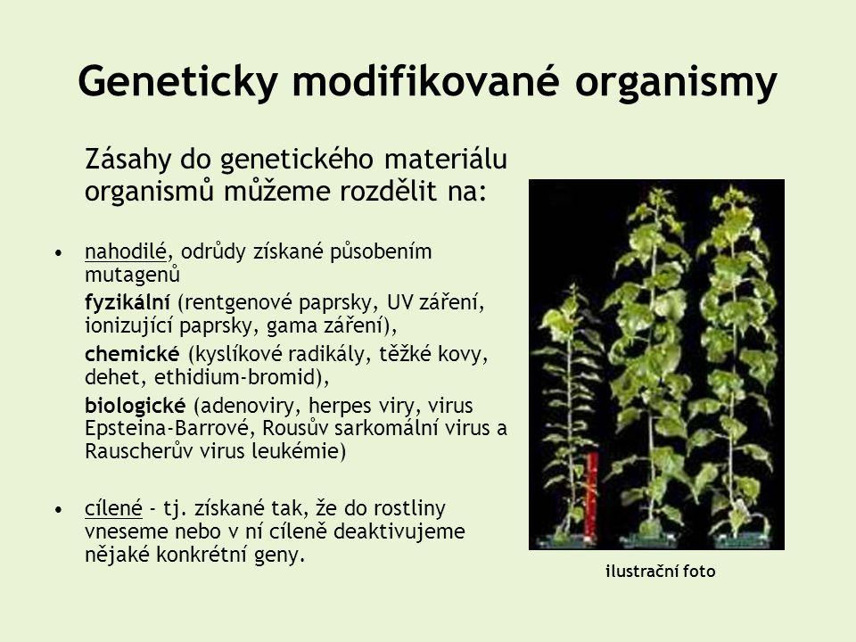 Geneticky modifikované organismy Zásahy do genetického materiálu organismů můžeme rozdělit na: •nahodilé, odrůdy získané působením mutagenů fyzikální