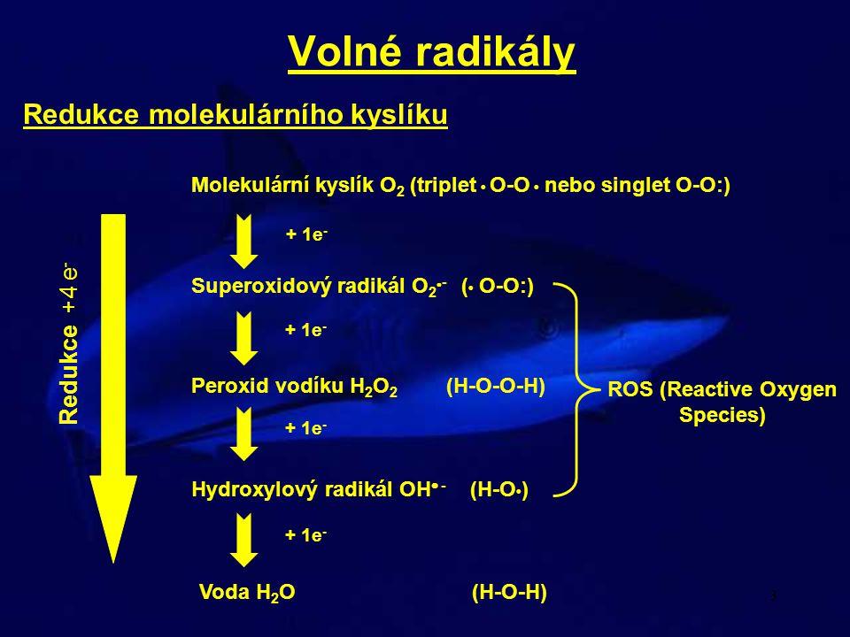 3 Volné radikály Redukce molekulárního kyslíku Superoxidový radikál O 2  - ( • O-O:) Molekulární kyslík O 2 (triplet • O-O • nebo singlet O-O:) Perox
