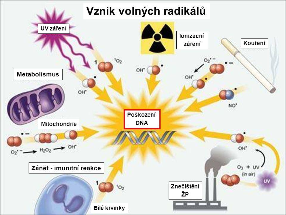 4 Hlavní zdroje volných radikálů Dýchací řetězec v mitochondriích •1 - 4 % O 2 při oxidativní fosforilaci přeměněno na superoxid a H 2 O 2 Biotransfor