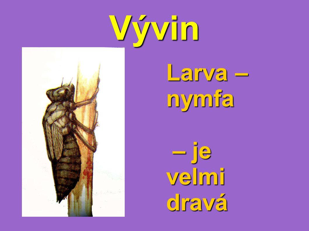 Vývin Larva – nymfa – je velmi dravá – je velmi dravá
