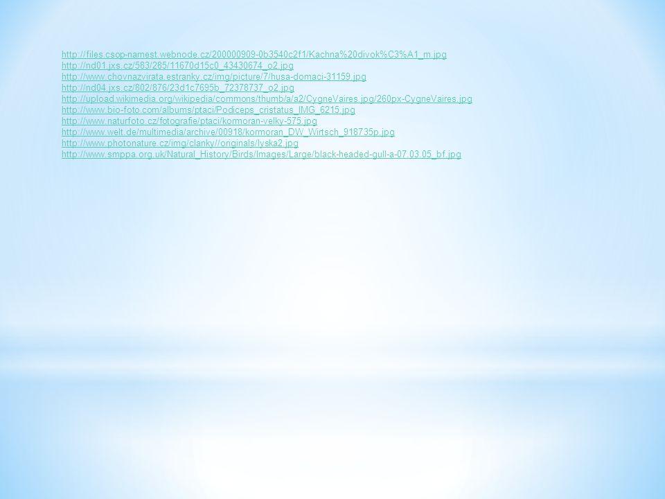 http://files.csop-namest.webnode.cz/200000909-0b3540c2f1/Kachna%20divok%C3%A1_m.jpg http://nd01.jxs.cz/583/285/11670d15c0_43430674_o2.jpg http://www.c