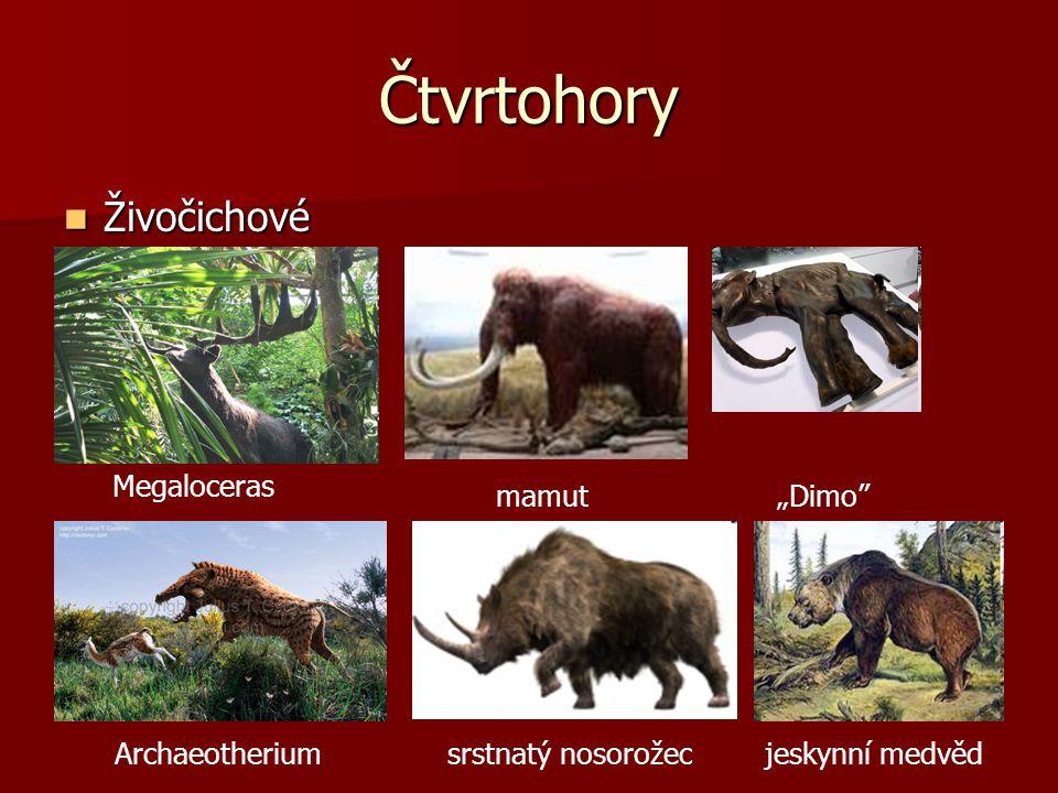 """Čtvrtohory  Živočichové Megaloceras mamut""""Dimo Archaeotherium srstnatý nosorožec jeskynní medvěd"""
