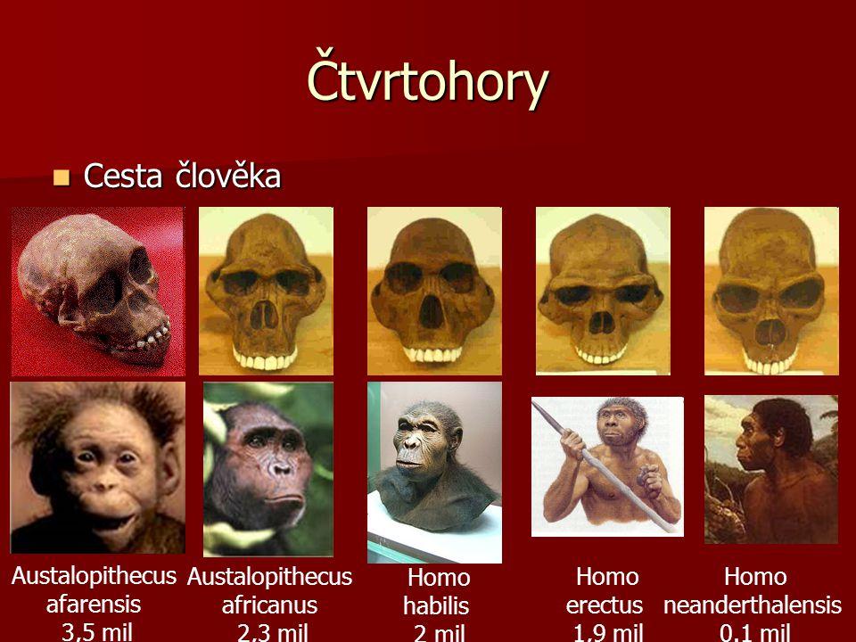 Čtvrtohory  Cesta člověka Austalopithecus afarensis 3,5 mil Austalopithecus africanus 2,3 mil Homo habilis 2 mil Homo erectus 1,9 mil Homo neanderthalensis 0.1 mil