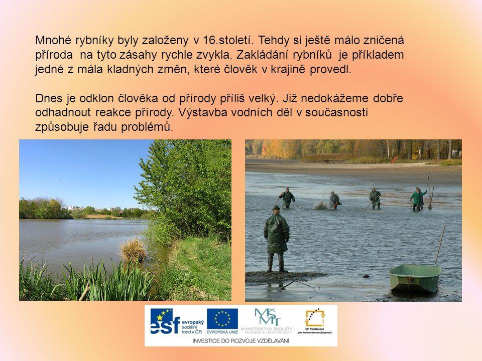 Mnohé rybníky byly založeny v 16.století. Tehdy si ještě málo zničená příroda na tyto zásahy rychle zvykla. Zakládání rybníků je příkladem jedné z mál