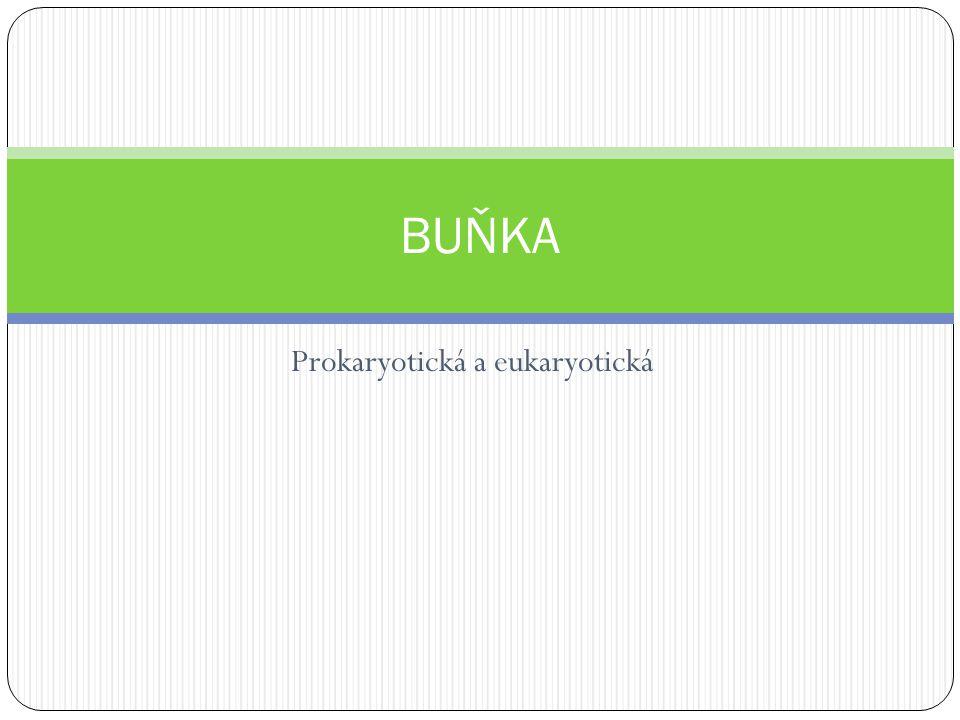 Prokaryotická a eukaryotická BUŇKA