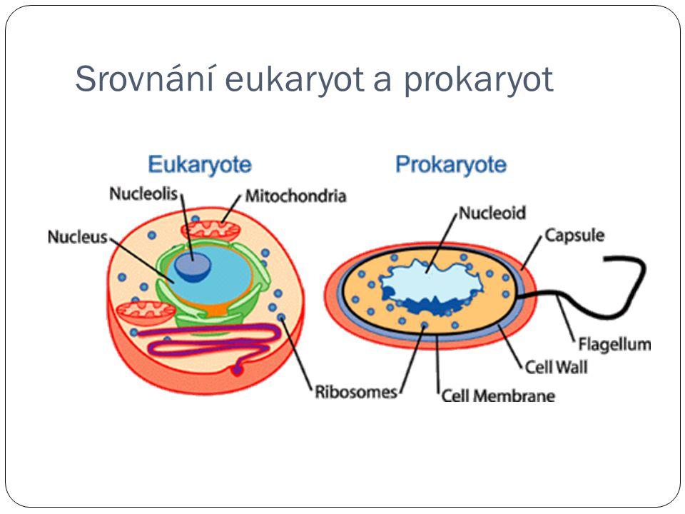 Srovnání eukaryot a prokaryot