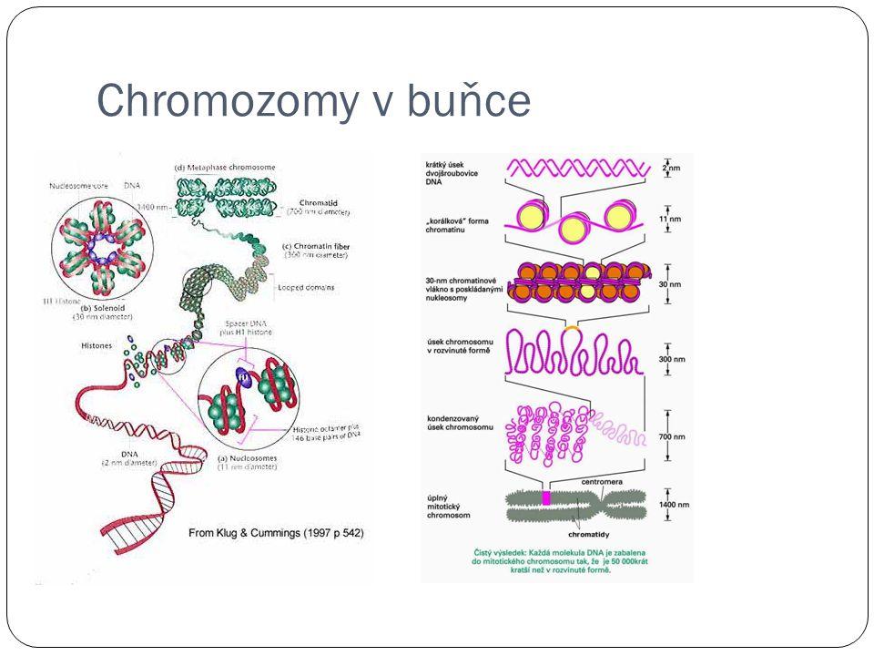 Chromozomy v buňce