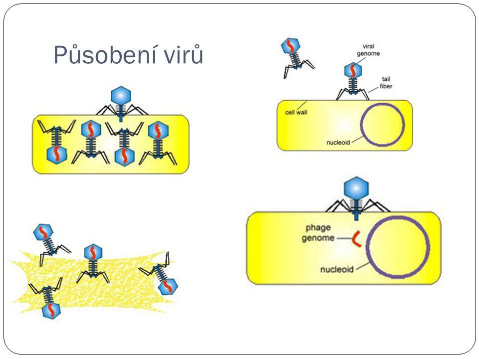 Působení virů
