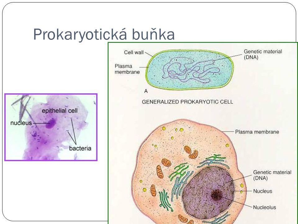 Buňka sinice