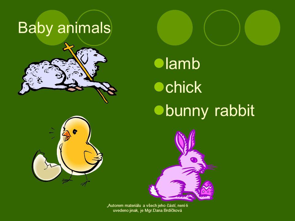 """Baby animals  lamb  chick  bunny rabbit """"Autorem materiálu a všech jeho částí, není-li uvedeno jinak, je Mgr.Dana Brdíčková"""