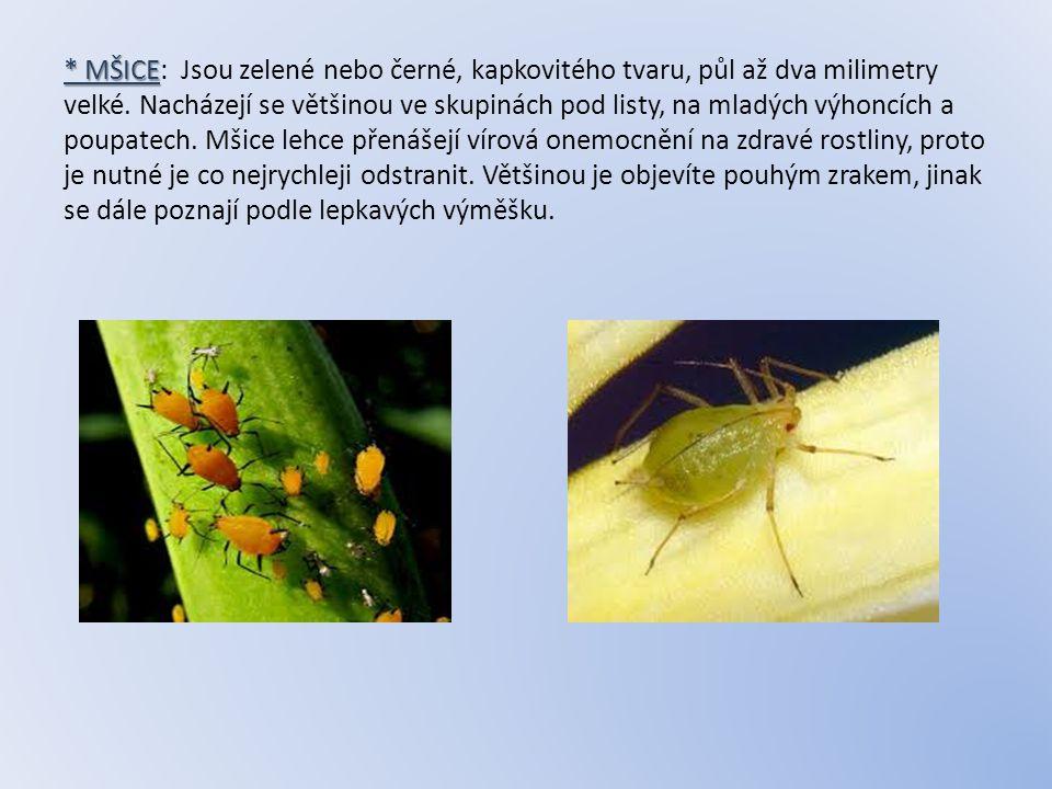 * MŠICE * MŠICE: Jsou zelené nebo černé, kapkovitého tvaru, půl až dva milimetry velké. Nacházejí se většinou ve skupinách pod listy, na mladých výhon