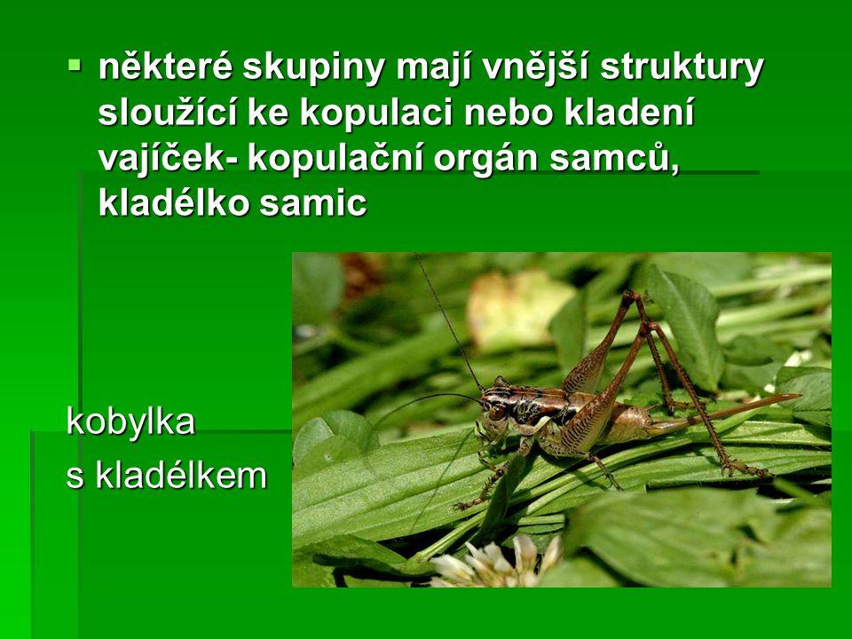 Použitá literatura:  Text: Papáček M., (1994): Zoologie.