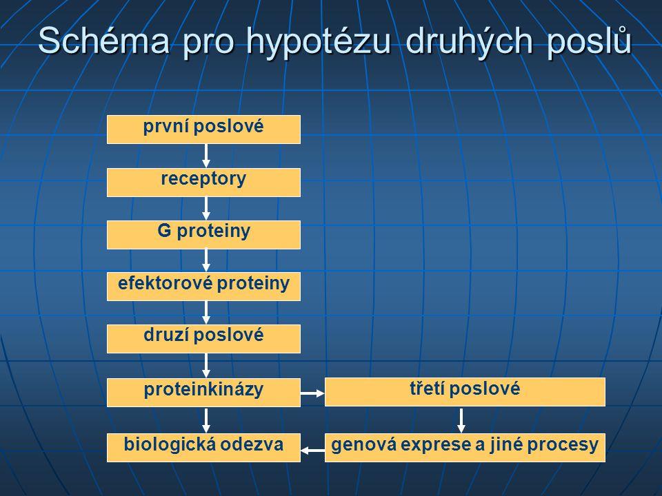 Schéma pro hypotézu druhých poslů receptory G proteiny efektorové proteiny druzí poslové proteinkinázy biologická odezva genová exprese a jiné procesy