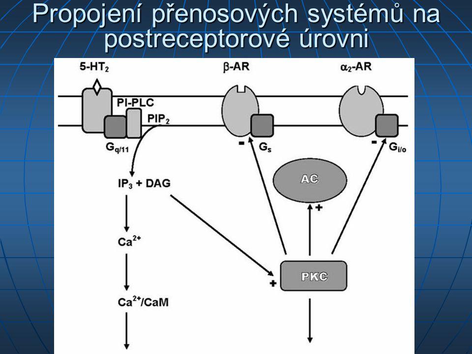 Propojení přenosových systémů na postreceptorové úrovni
