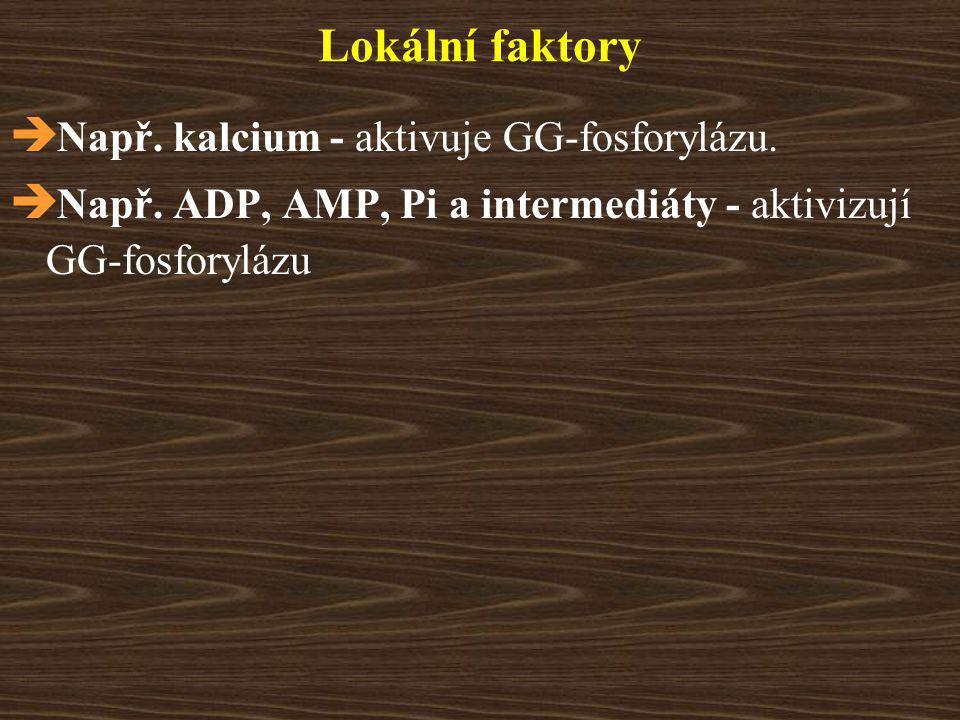 Lokální faktory  Např.kalcium - aktivuje GG-fosforylázu.