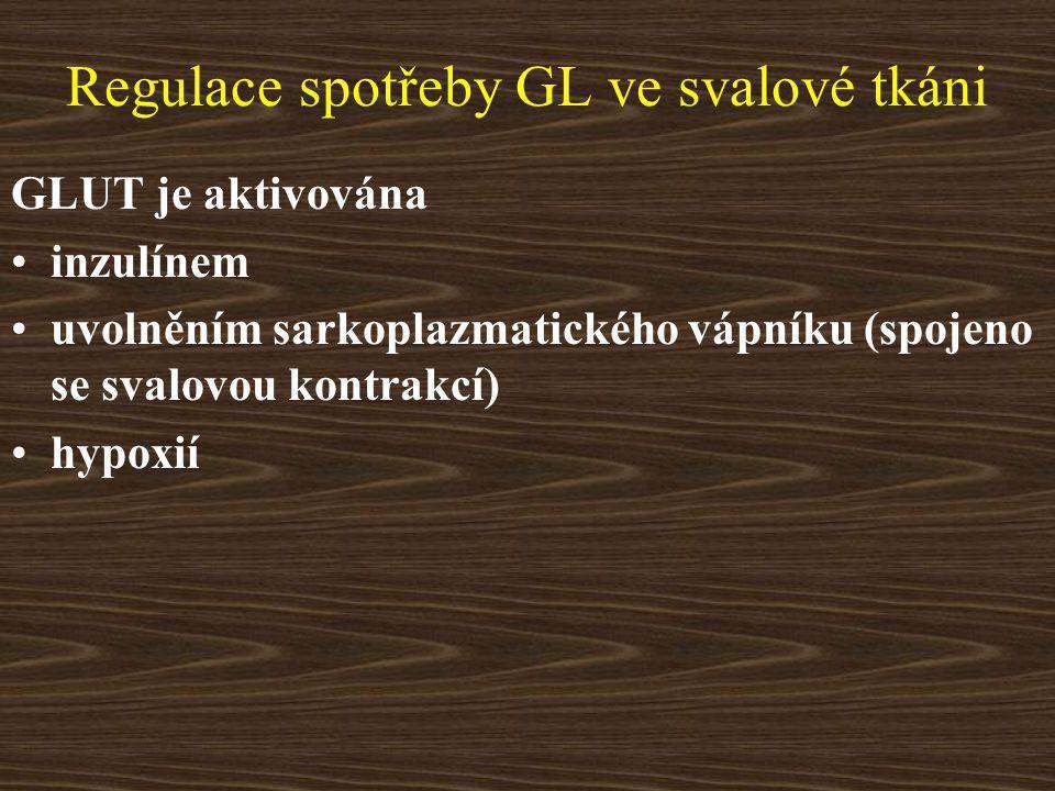 Regulace spotřeby GL ve svalové tkáni GLUT je aktivována inzulínem uvolněním sarkoplazmatického vápníku (spojeno se svalovou kontrakcí) hypoxií