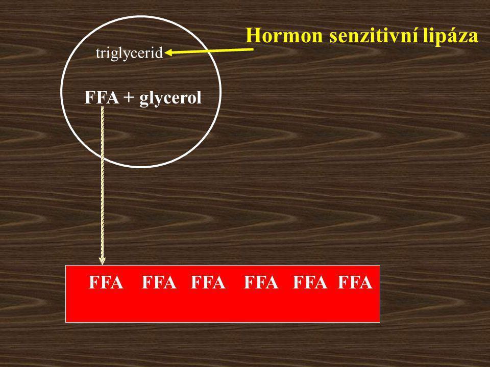 FFA + glycerol Hormon senzitivní lipáza FFA triglycerid