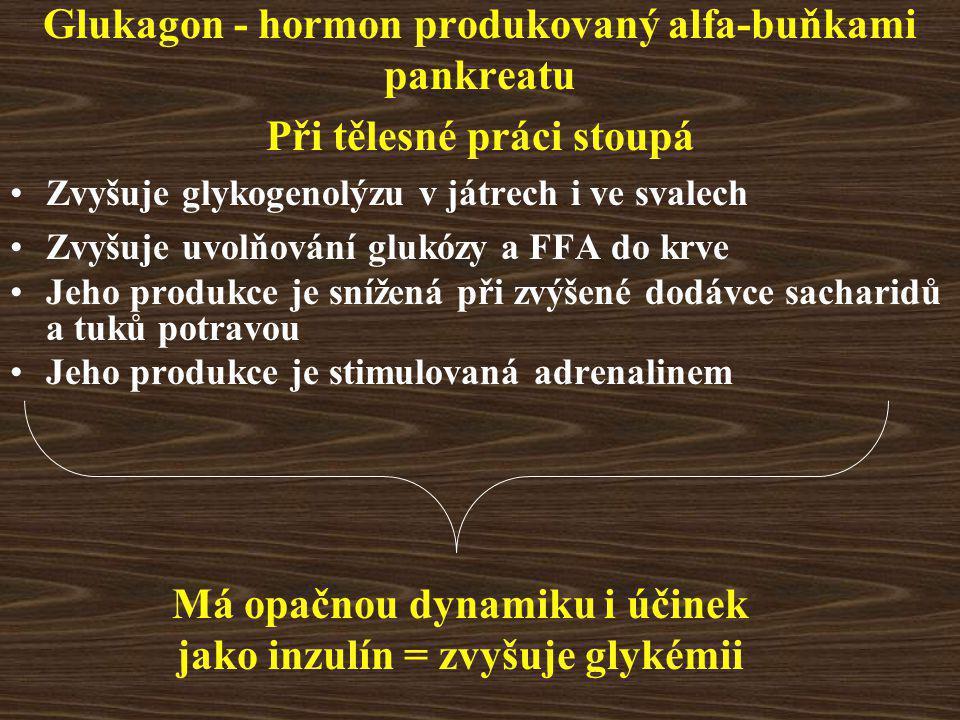 Glukagon - hormon produkovaný alfa-buňkami pankreatu Při tělesné práci stoupá Zvyšuje glykogenolýzu v játrech i ve svalech Zvyšuje uvolňování glukózy a FFA do krve Jeho produkce je snížená při zvýšené dodávce sacharidů a tuků potravou Jeho produkce je stimulovaná adrenalinem Má opačnou dynamiku i účinek jako inzulín = zvyšuje glykémii