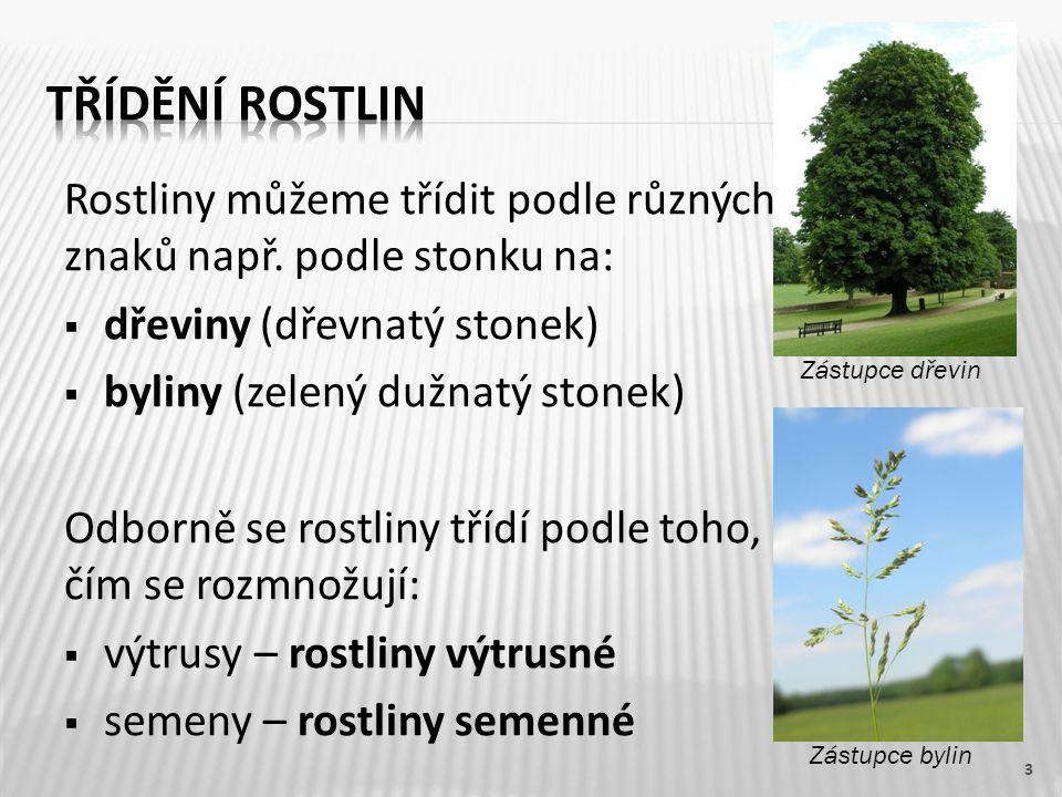 Rostliny můžeme třídit podle různých znaků např. podle stonku na:  dřeviny (dřevnatý stonek)  byliny (zelený dužnatý stonek) Odborně se rostliny tří