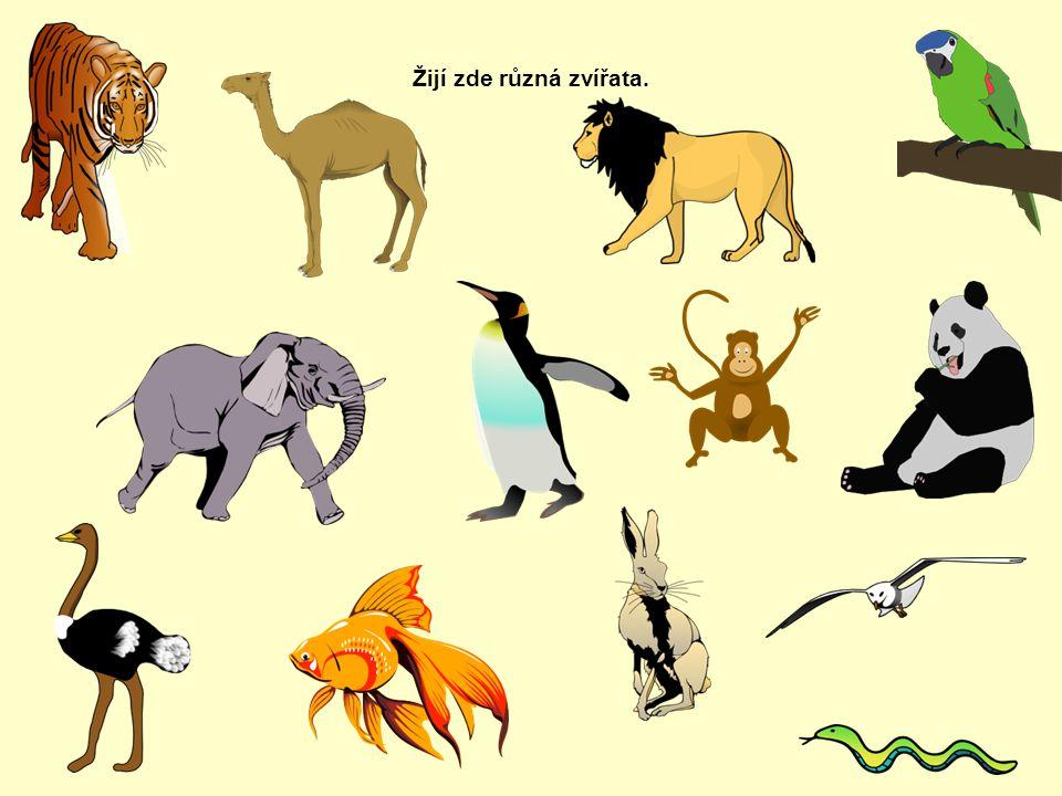 Žijí zde různá zvířata.