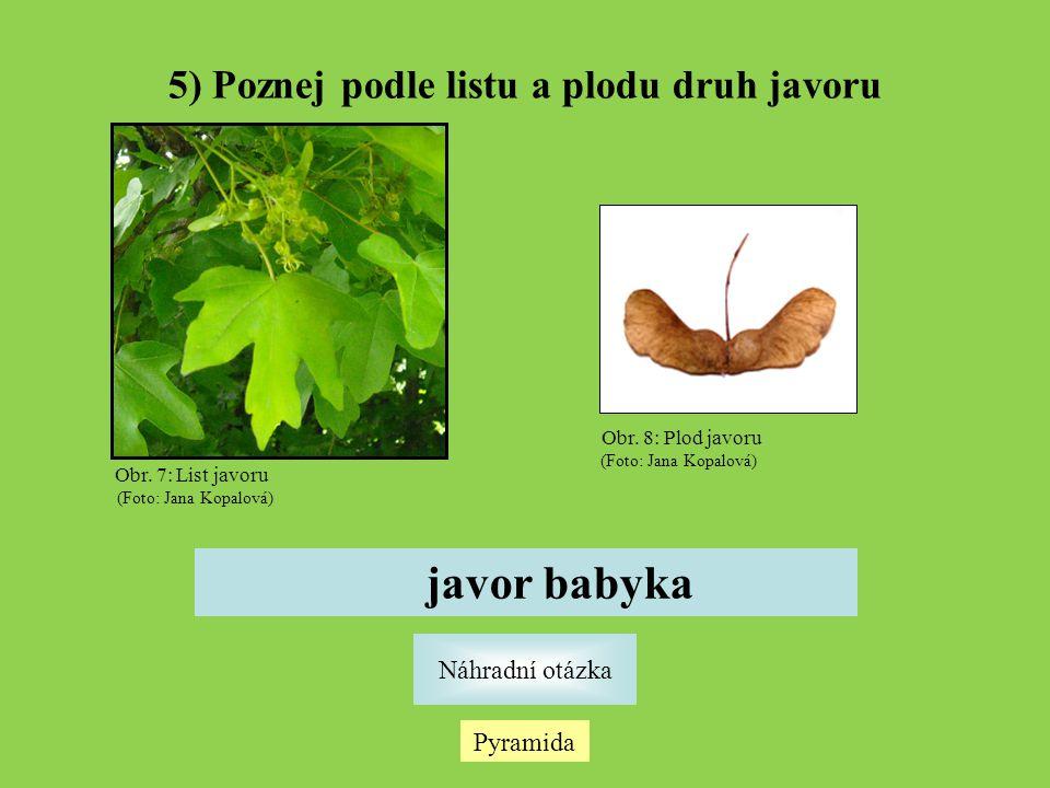 5) Poznej podle listu a plodu druh javoru Pyramida Náhradní otázka javor babyka Obr.