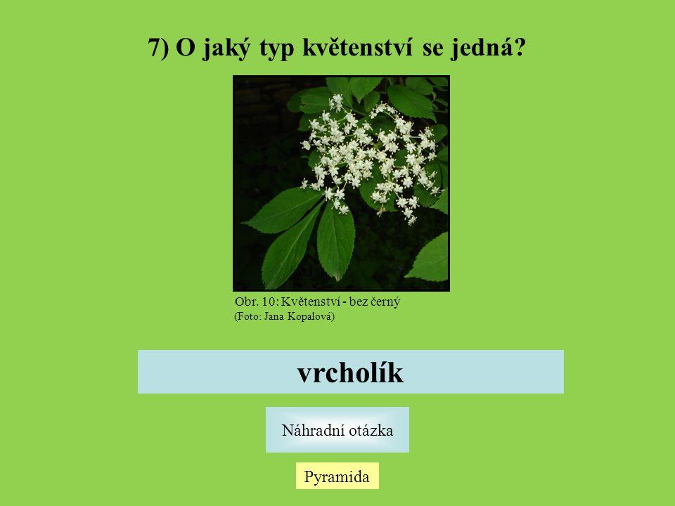 Pyramida Náhradní otázka 7) O jaký typ květenství se jedná.