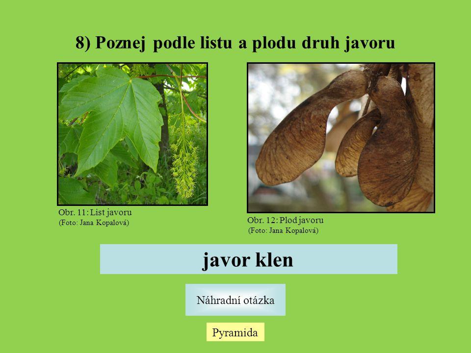 Pyramida Náhradní otázka 8) Poznej podle listu a plodu druh javoru javor klen Obr.