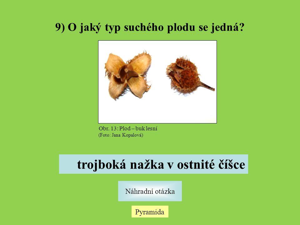 Pyramida Náhradní otázka 9) O jaký typ suchého plodu se jedná? trojboká nažka v ostnité číšce Obr. 13: Plod – buk lesní (Foto: Jana Kopalová)