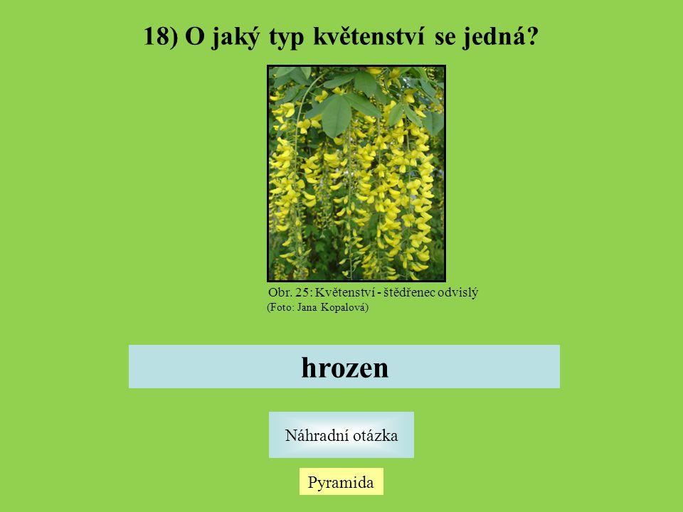 Pyramida Náhradní otázka 18) O jaký typ květenství se jedná? hrozen Obr. 25: Květenství - štědřenec odvislý (Foto: Jana Kopalová)