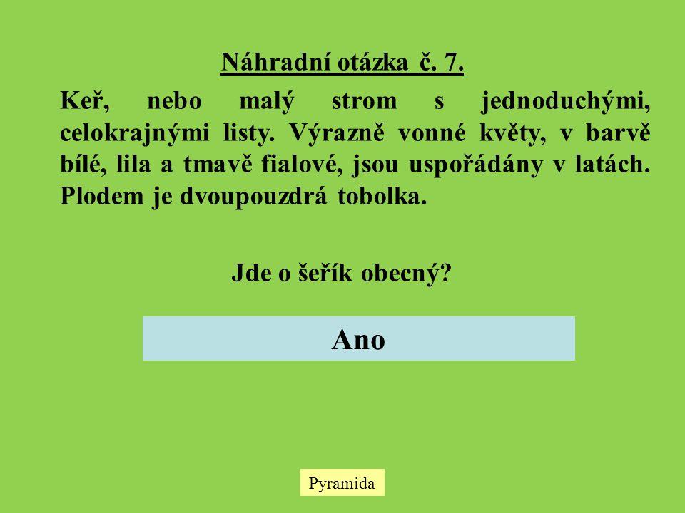 Pyramida Náhradní otázka č. 7. Keř, nebo malý strom s jednoduchými, celokrajnými listy. Výrazně vonné květy, v barvě bílé, lila a tmavě fialové, jsou